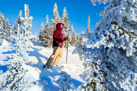 Exploring top mount and winter forest with ski touring
