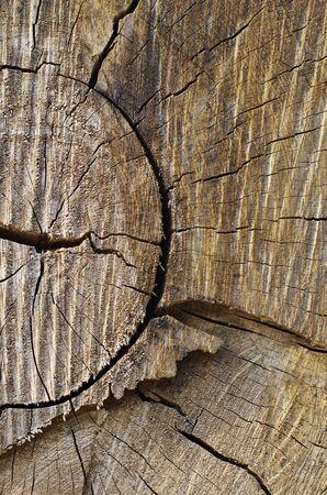 Wood Cracked Pattern photo