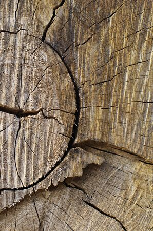 Wood Cracked Pattern