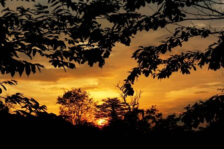 Sunset with Silhouette Forest