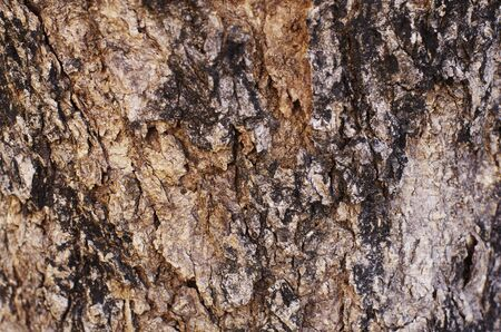 Skin of Tree