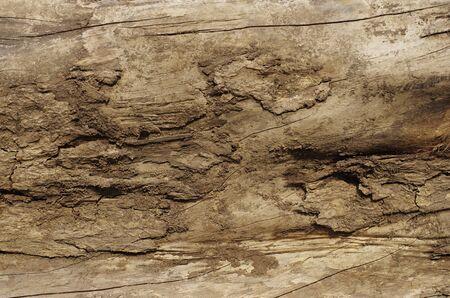 Surface of Log