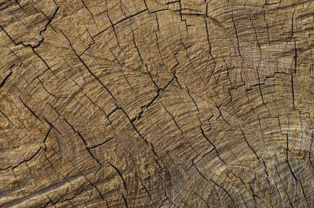 cross process: Wood Cracked Pattern