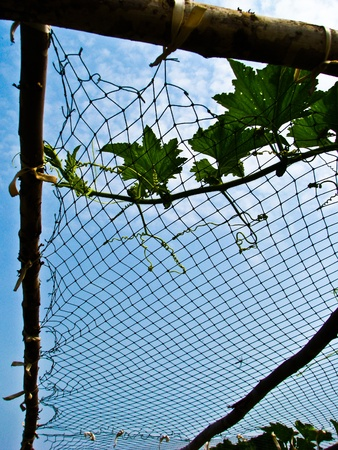 clinging: Plant clinging with the net