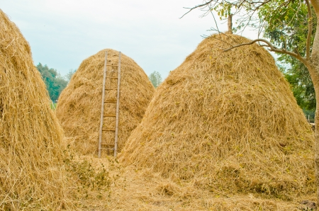 haystack in Thailand photo