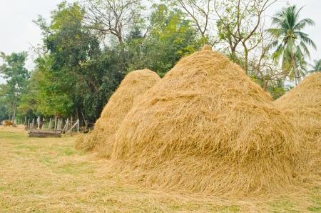 haystack in Thailand photo