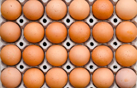 durty: Chicken egg food carton package background Stock Photo