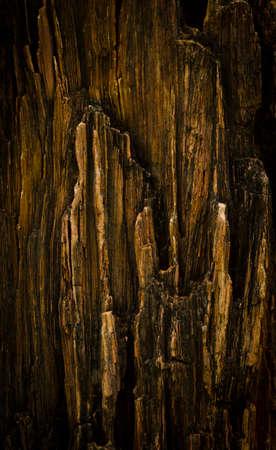 detai: petrified wood detai
