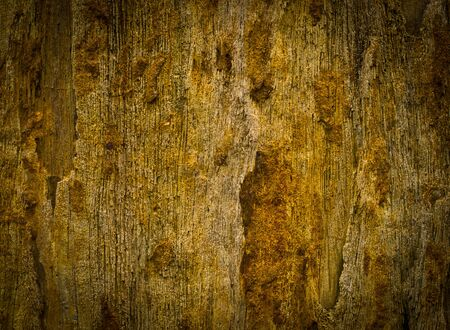 petrified fossil: Petrified wood detail