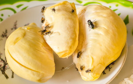 House fly on durian Stock Photo - 28219792