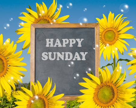 Happy Sunday with blooming sunflower on background Stock Photo