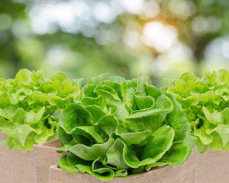 verduras verdes: verduras frescas Foto de archivo