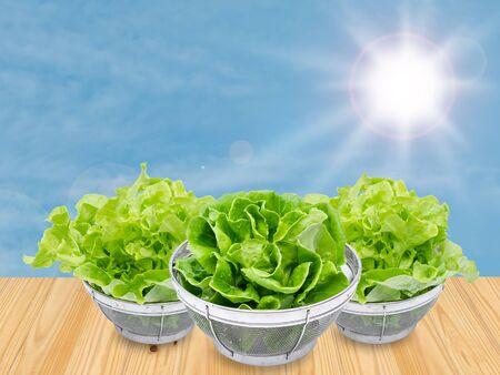 verduras verdes: fresh green vegetables in basket