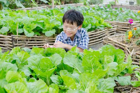 Asian boy working in vegetable farm Standard-Bild