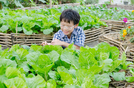 Asian boy working in vegetable farm Foto de archivo