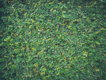 Texture of green leaves on wall