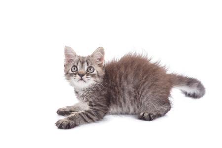 Little kitten isolated over white background