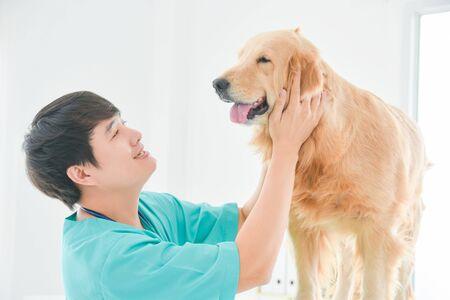 Asian male veterinarian examining golden retriever dog in vet clinic.