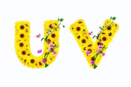 sunflower alphabet U V isolated on white background photo