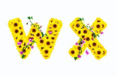 sunflower alphabet W X isolated on white background photo