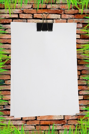 fresh grass around white blank note paper on old brick wall photo
