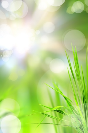 abstract beautiful fresh grass and light reflect in morning photo