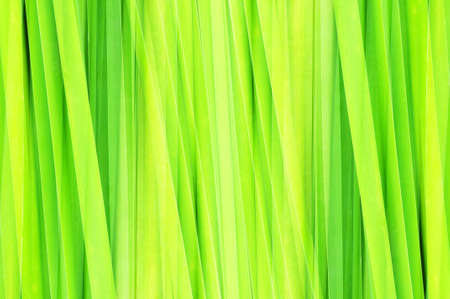 abstract green leaf for background photo