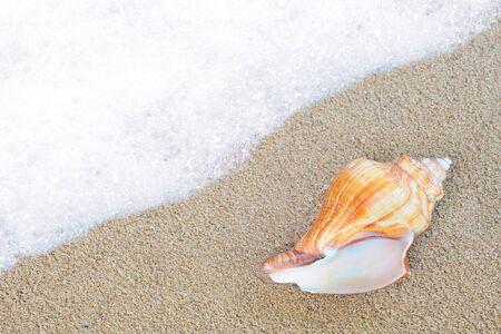 mejillones: Shell en la arena al lado de las olas del mar