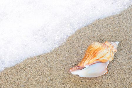 cone shell: shell on the sand beside sea waves
