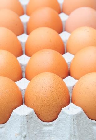 fresh organic brown eggs photo