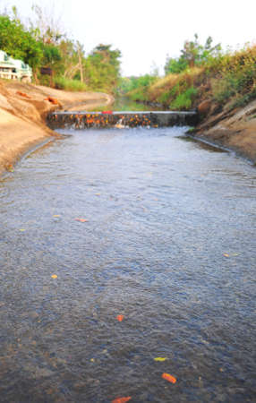 irrigated: water flowing in an irrigation canal