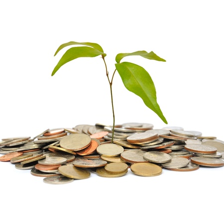 the tree and coin on white background Stock Photo - 14556643