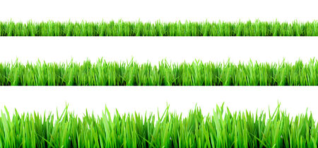 naturally: fresh grass for background