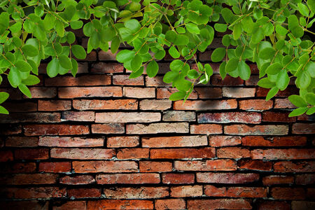 old brick wall and the tree photo