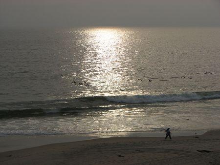 walker beach sand ocean water sea waves seagulls exercise walking person