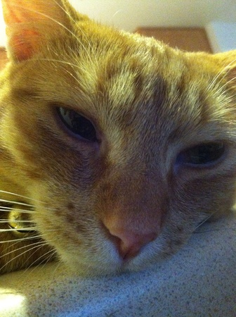 otganimalpets01: cat