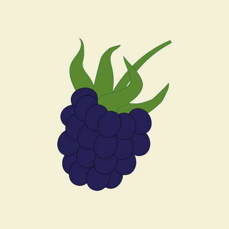 berry: Berry Icon Illustration