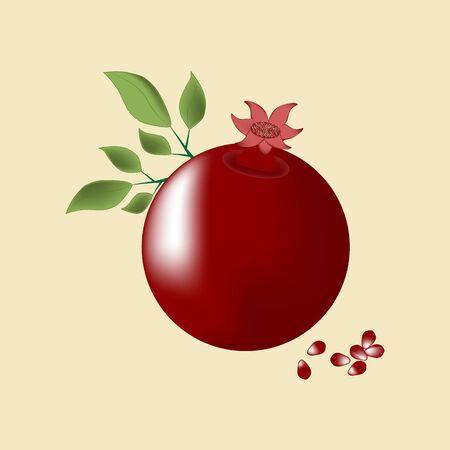 fruit tree: Pomegranate Fruit Icon. Vector illustration