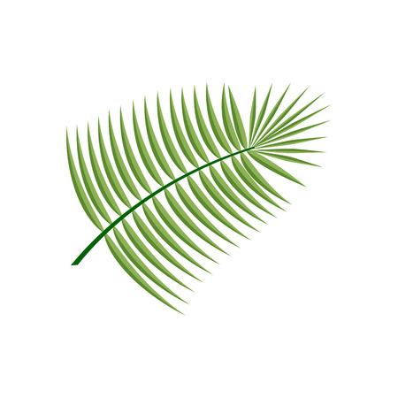 coconut leaf: Coconut  Leaf Icon on the white background. Vector illustration Illustration