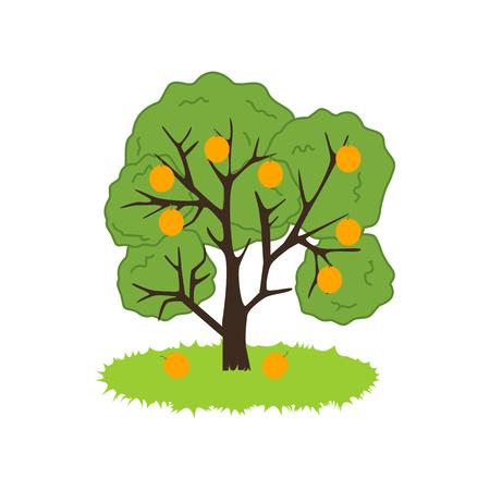sweet grass: Orange Tree Icon on the white background. Vector illustration