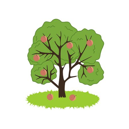 peach tree: Peach Tree Icon on the white background. Vector illustration Illustration
