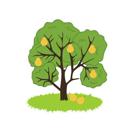 pear tree: Pear Tree Icon on the white background. Vector illustration