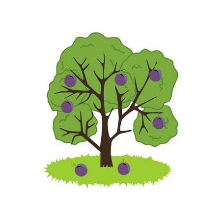 ciruela: Icono de árbol de ciruelo en el fondo blanco. ilustración vectorial