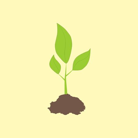 Green leaves. Green sprout on the yellow background. Vector illustration