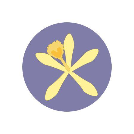 vainilla flor: Ilustración de la flor de la vainilla en el fondo morado. ilustración vectorial