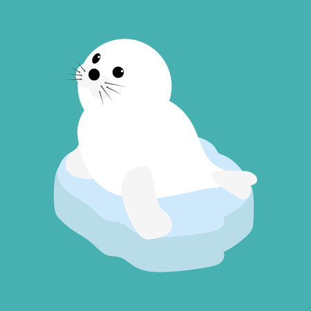 baby seal: Seal baby on a ice floe. Vector illustration Illustration