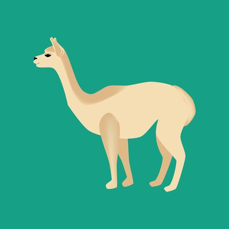 Vicuna animal illustration on the green background. Vector illustration Illustration
