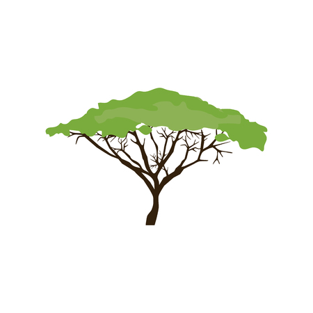 白い背景にアカシアの木のイラスト。ベクトル図 写真素材 - 99406549