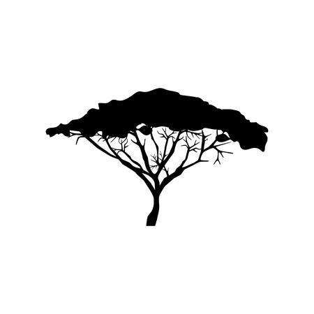 De boomillustratie van de acacia op de witte achtergrond. Vector illustratie