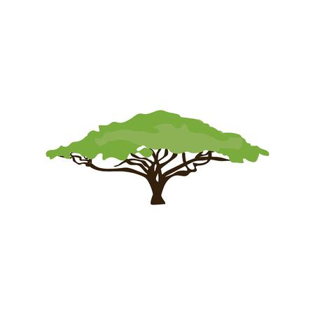 Akazienbaumillustration auf dem weißen Hintergrund. Vektor-illustration